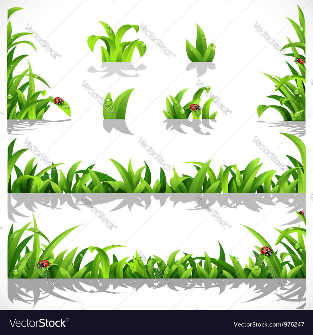 Green lush grass with dew and ladybirds vector | Price: 1 Credit (USD $1)