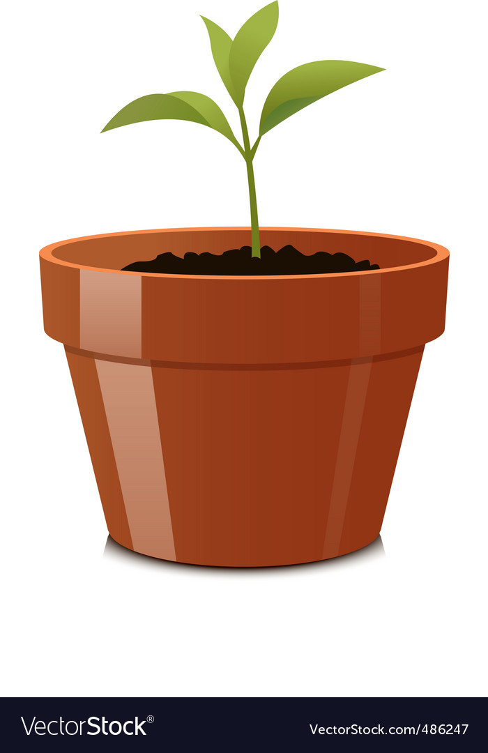 Sprout in pot vector