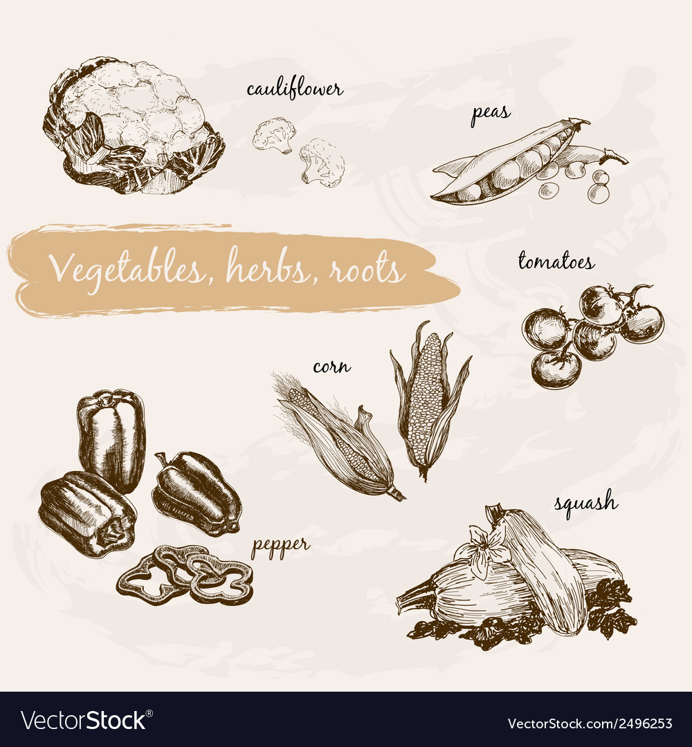 Vegetables herb and roots vector | Price: 1 Credit (USD $1)