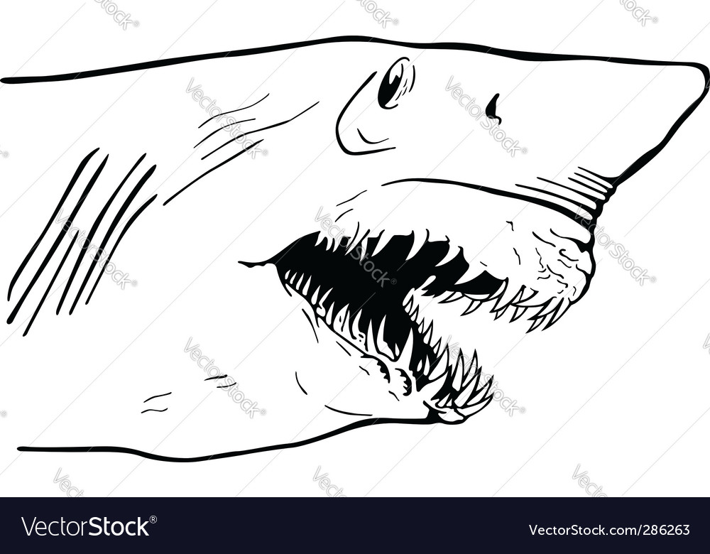 Shark jaw vector | Price: 1 Credit (USD $1)