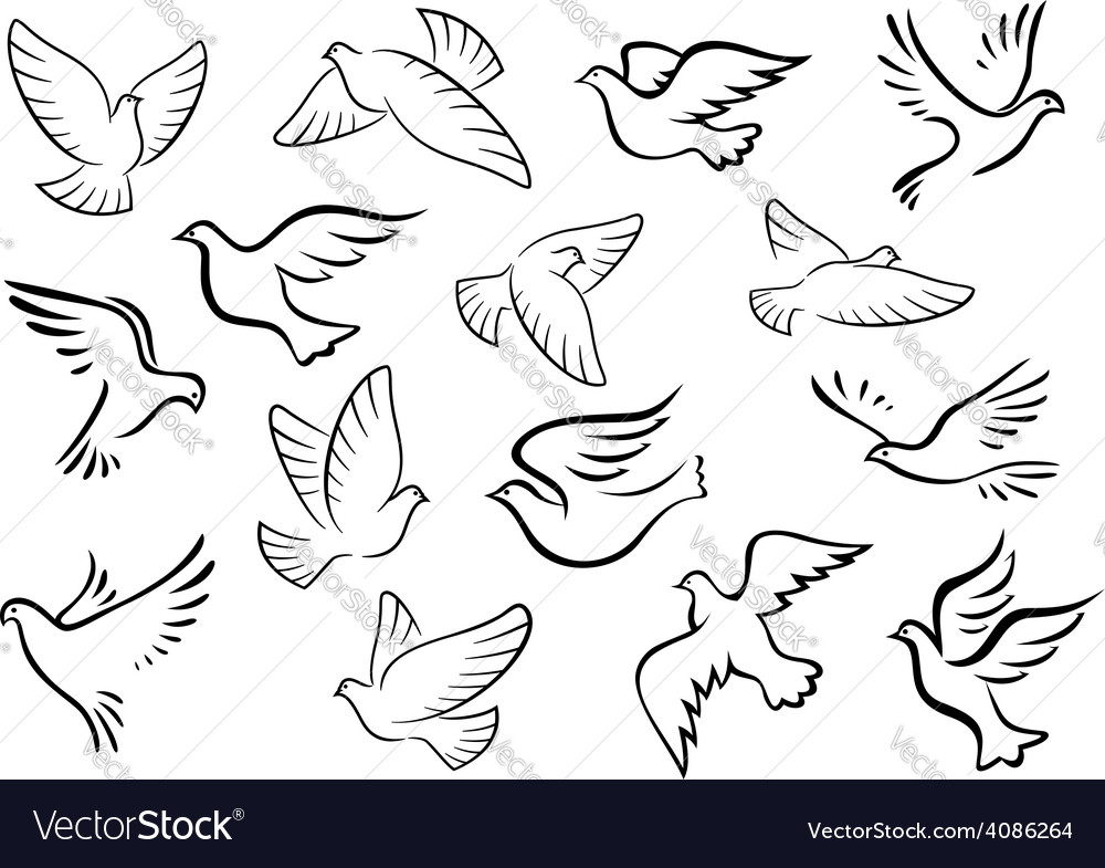 Pigeon and dove birds silhouettes vector | Price: 1 Credit (USD $1)