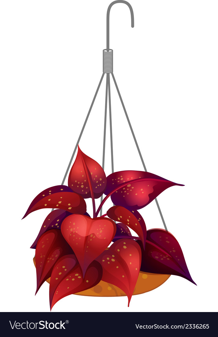 A hanging red plant vector | Price: 1 Credit (USD $1)