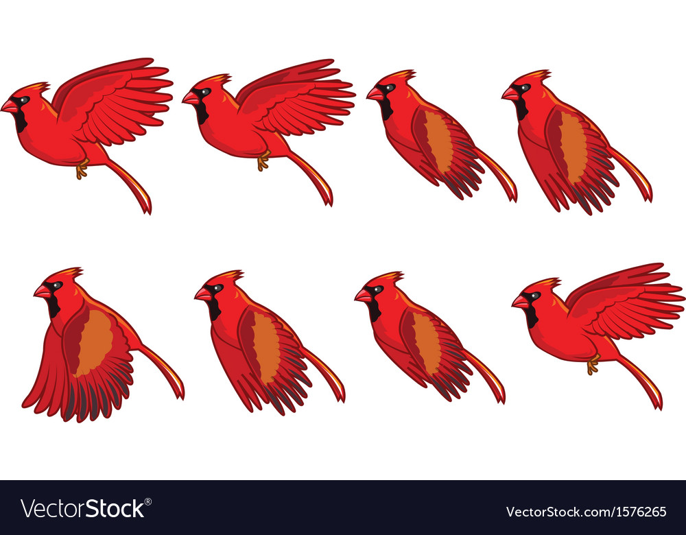 Cardinal bird flying animation vector | Price: 1 Credit (USD $1)