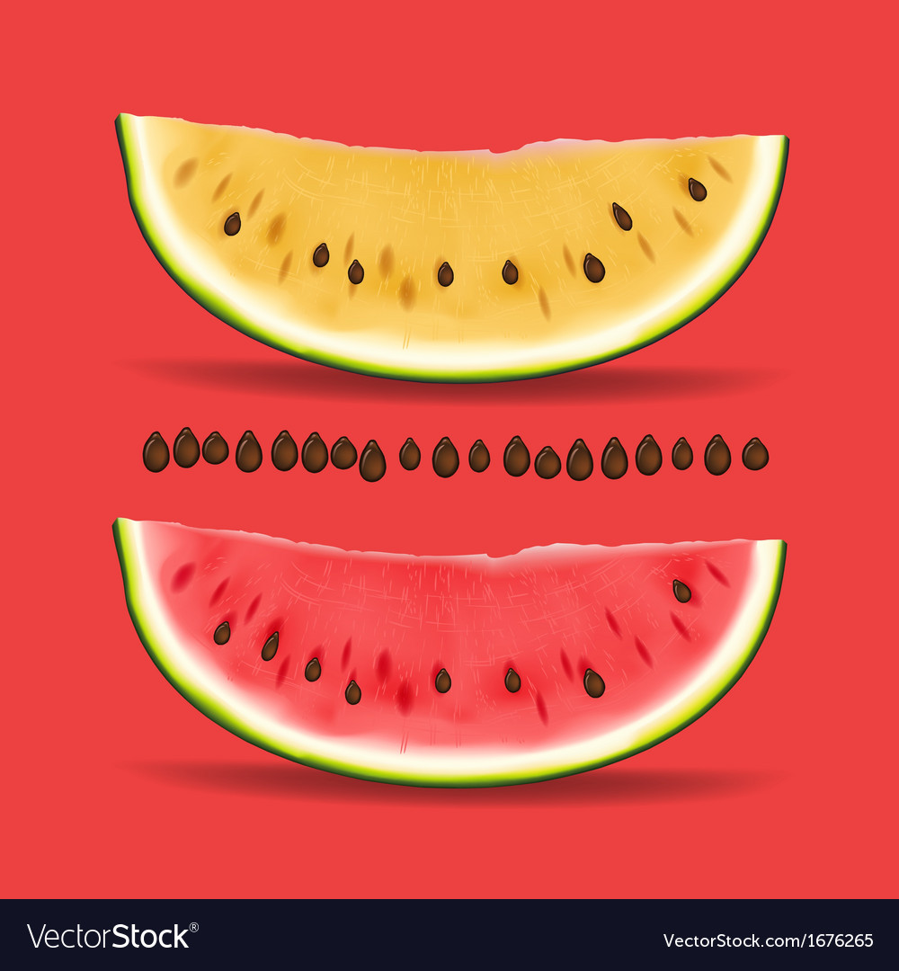 Slice of nice fresh yellow and red watermelon vector | Price: 1 Credit (USD $1)