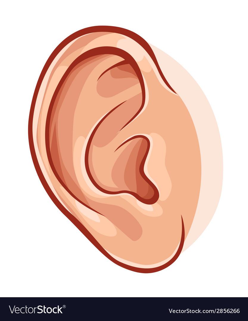 Human ear vector   Price: 1 Credit (USD $1)