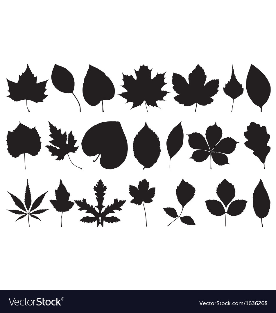 Leaf silhouettes vector | Price: 1 Credit (USD $1)