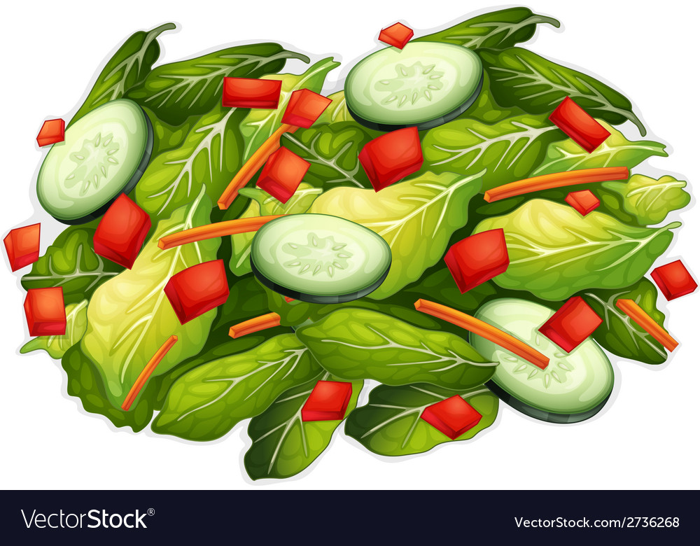 Salad vector | Price: 1 Credit (USD $1)