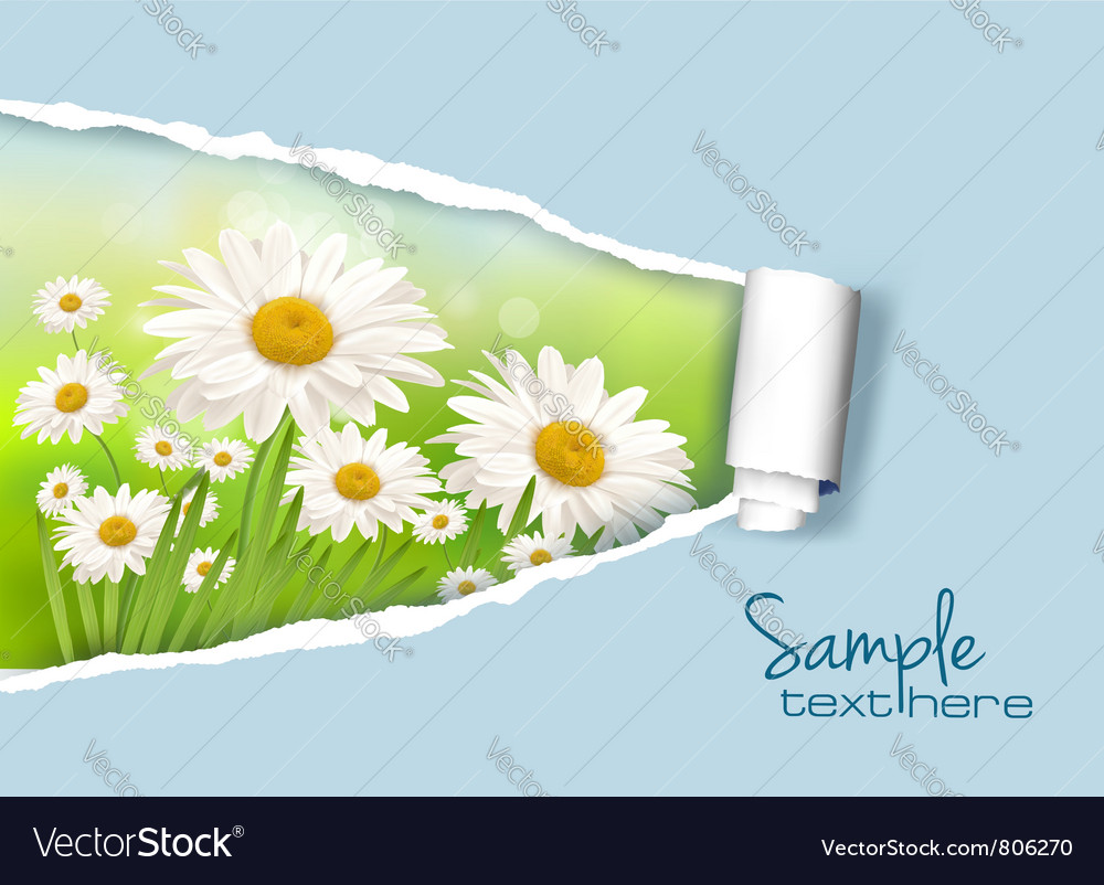 Daisy and ripped paper vector | Price: 1 Credit (USD $1)