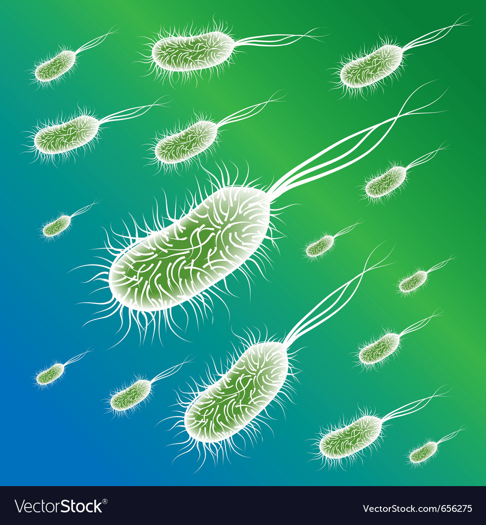 E coli bacteries vector | Price: 1 Credit (USD $1)