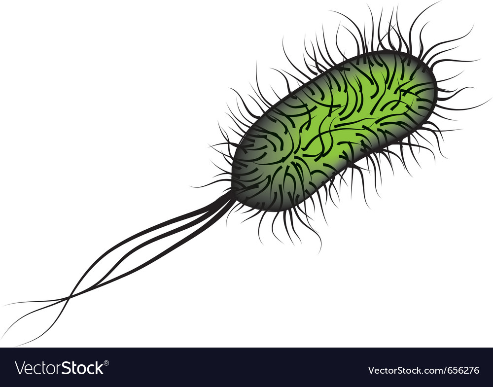 E coli bacteria i vector | Price: 1 Credit (USD $1)