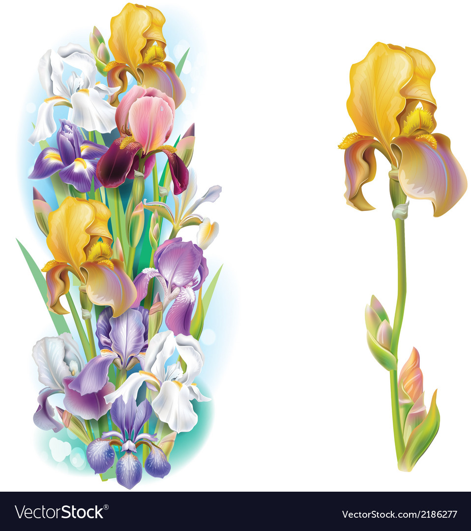 Garlands of iris flowers vector | Price: 1 Credit (USD $1)
