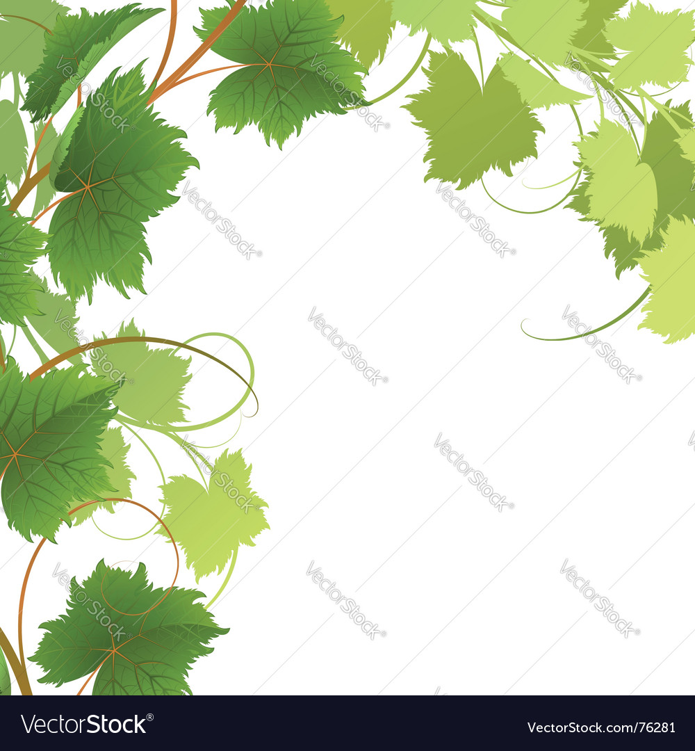 Vine vector | Price: 1 Credit (USD $1)