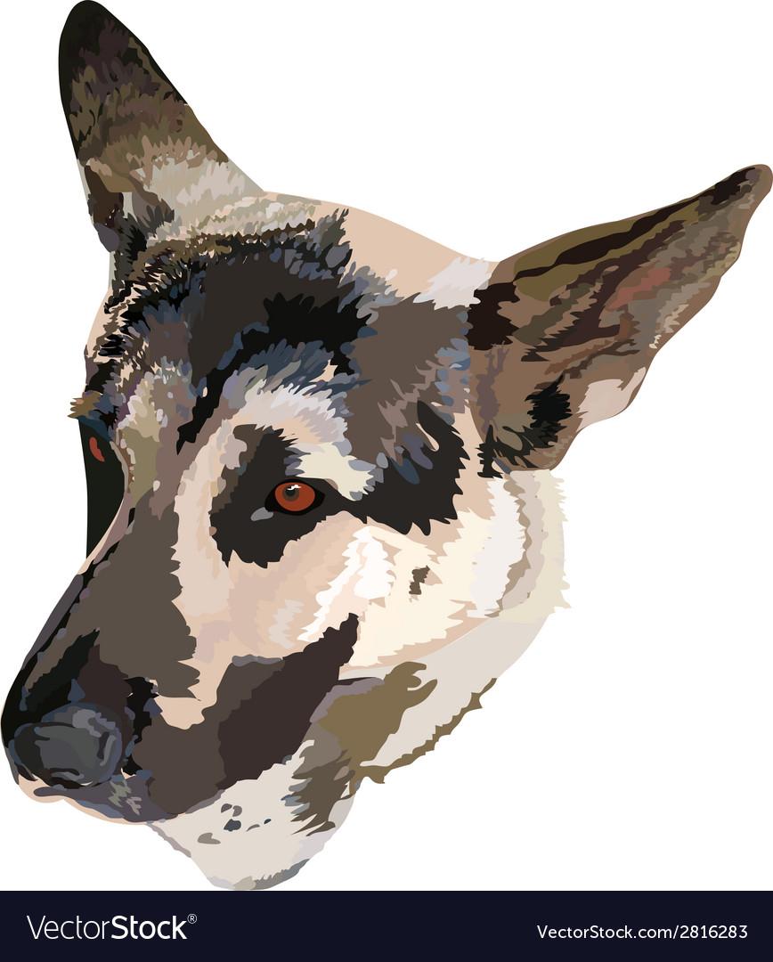 German shepherd vector | Price: 1 Credit (USD $1)