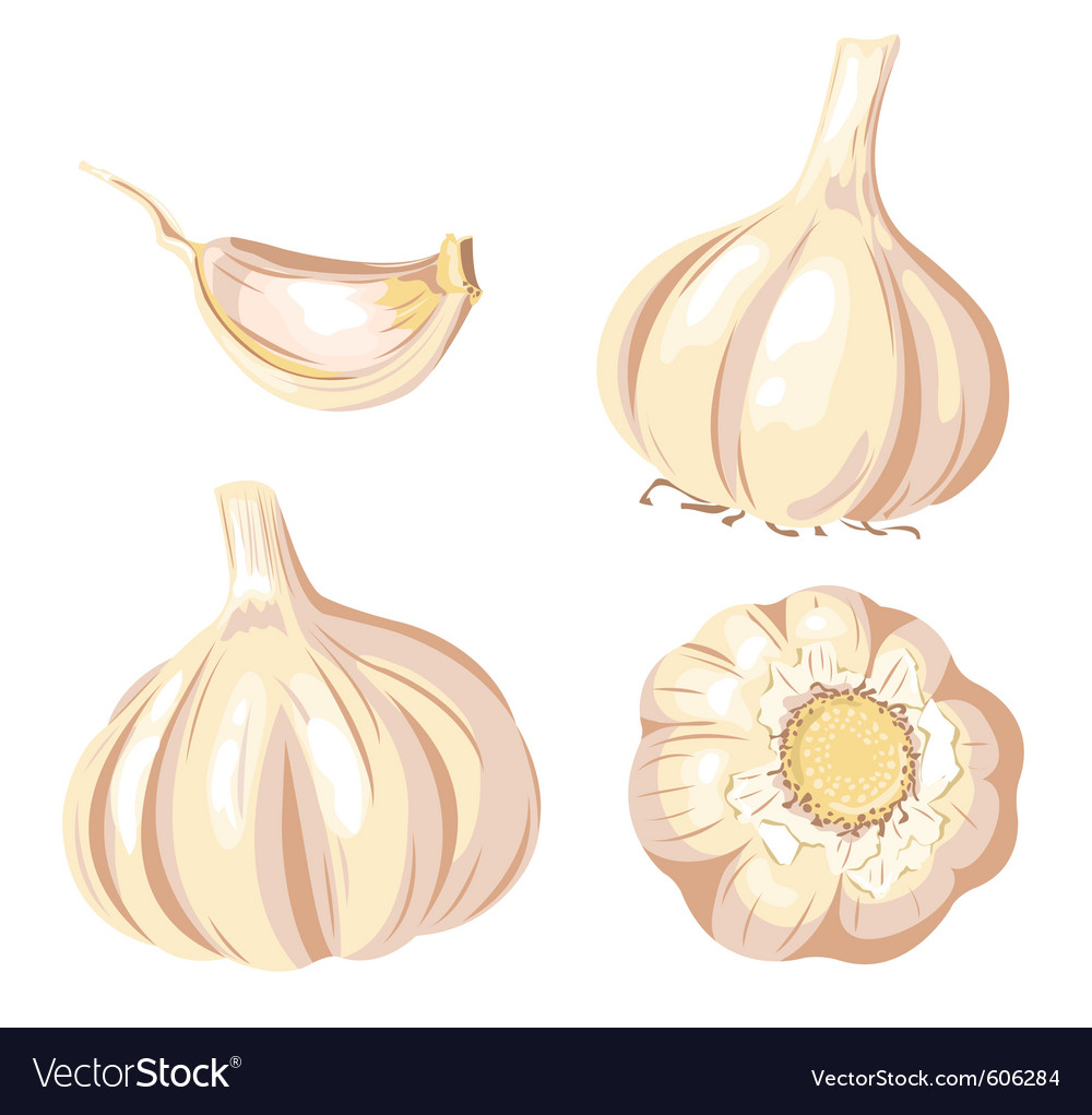 Garlic set vector | Price: 3 Credit (USD $3)