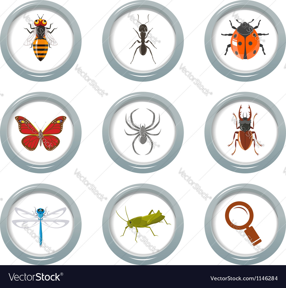 Insect icons set vector | Price: 1 Credit (USD $1)