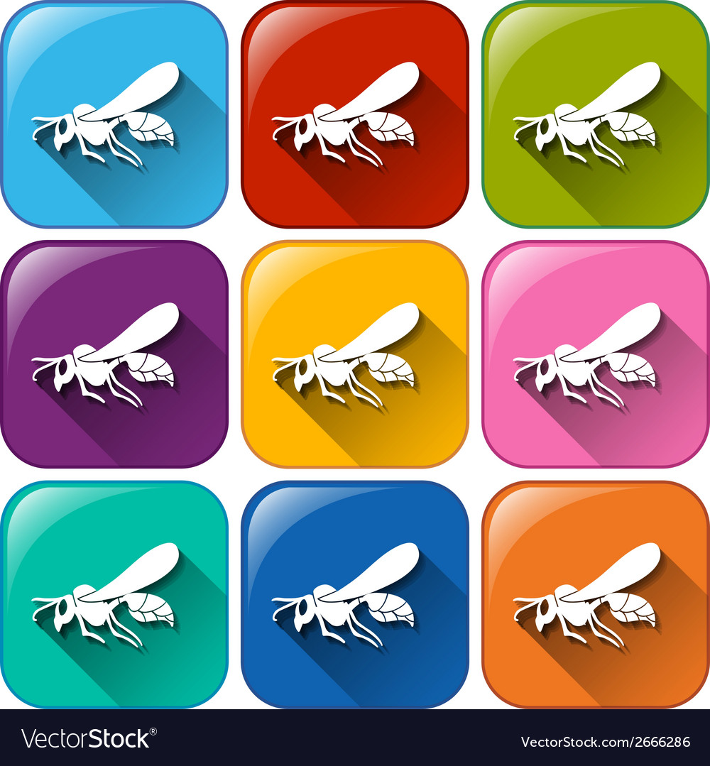 Insect icons vector | Price: 1 Credit (USD $1)