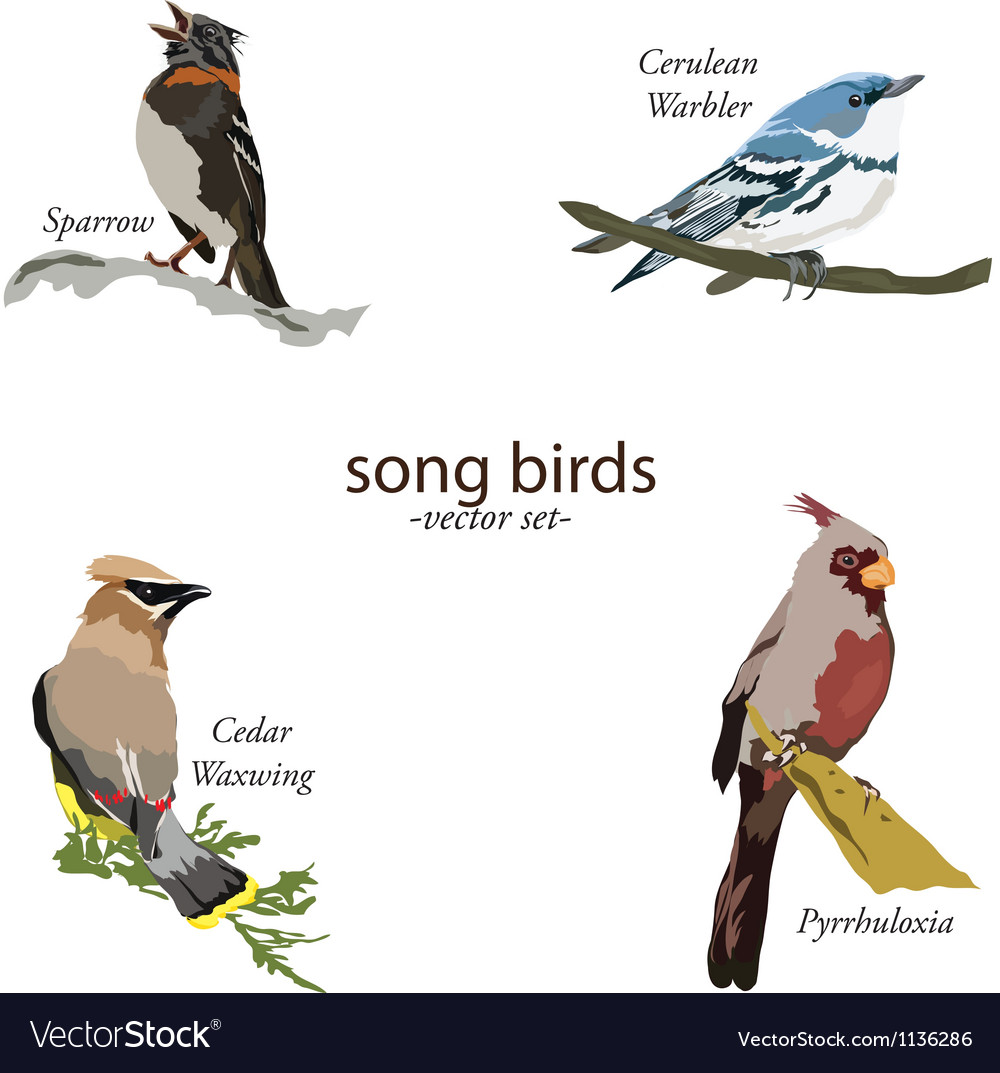 Song bird set vector | Price: 1 Credit (USD $1)