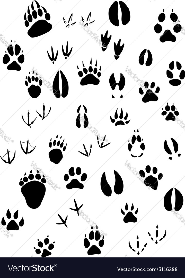 Animal footpints set vector | Price: 1 Credit (USD $1)