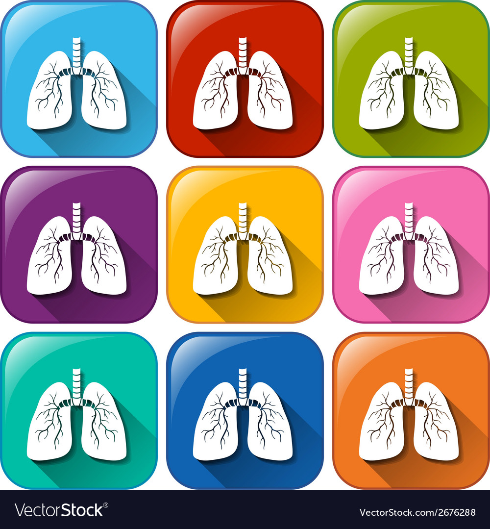 Lungs icons vector | Price: 1 Credit (USD $1)