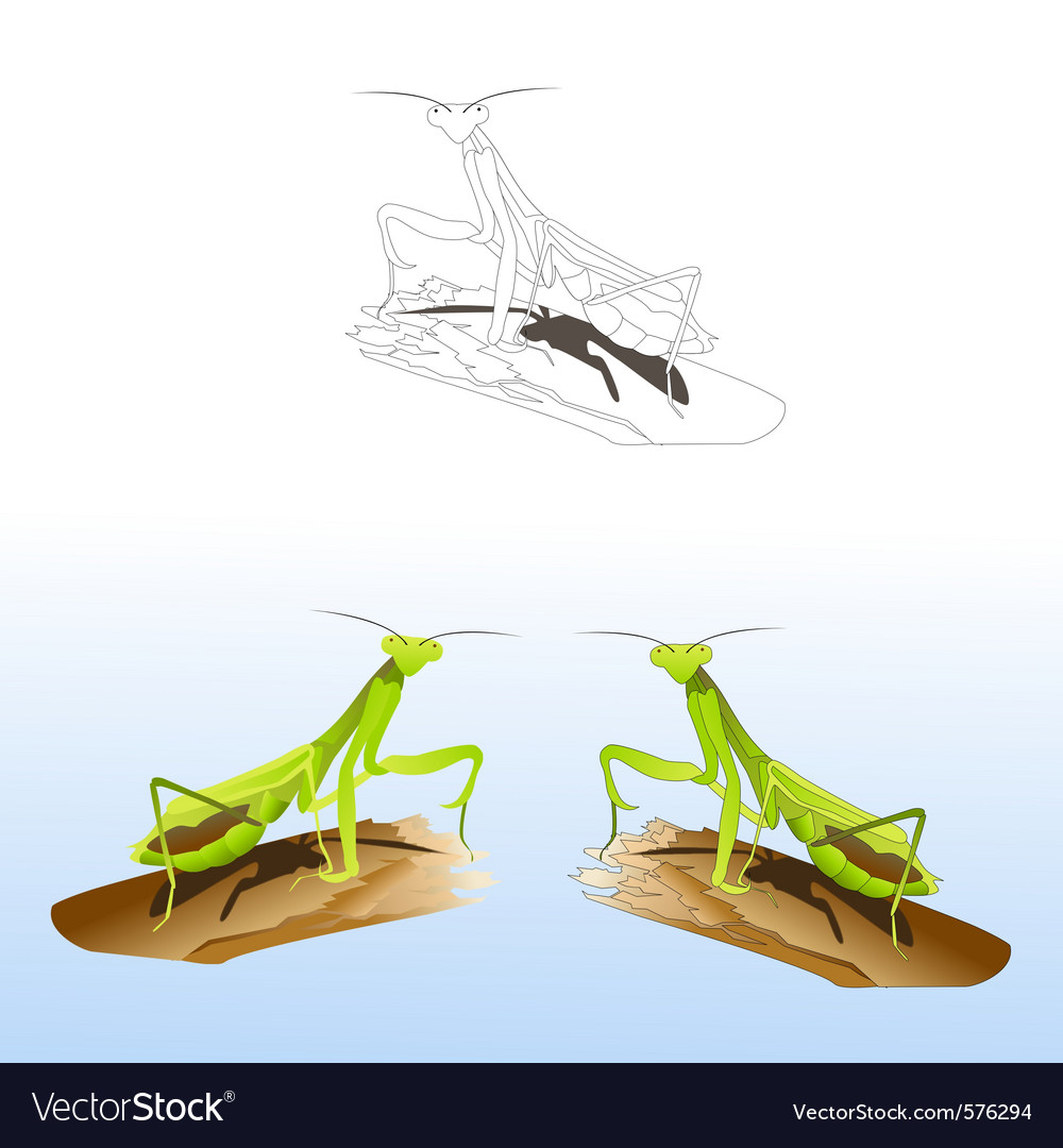 Praying mantises vector | Price: 1 Credit (USD $1)
