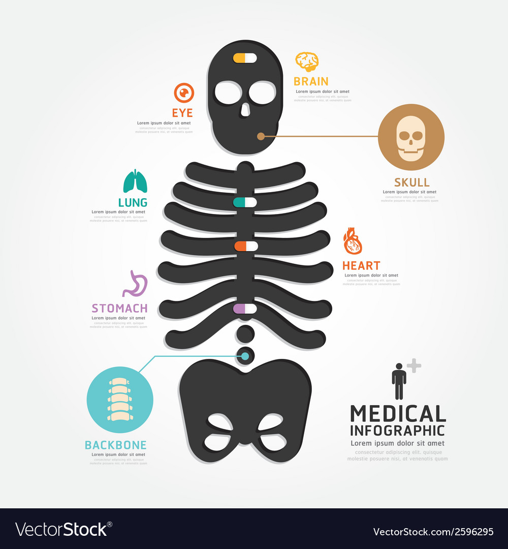 Infographics medical skull bone design diagram vector | Price: 1 Credit (USD $1)