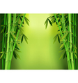 Stalks bamboo vector
