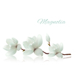 Flower background with blossom branch of white vector