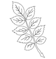 Leaf of dog rose contour vector