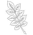 Leaf of dog rose contour vector