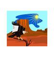 Vulture buzzard bird vector