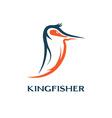 Kingfisher bird design template vector
