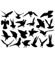 Set of different doves vector