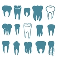 Human teeth set vector