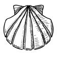 Sea shell vector