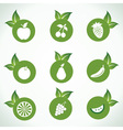 Different fruit icons and design with green leaf vector