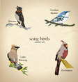 Song bird set vector