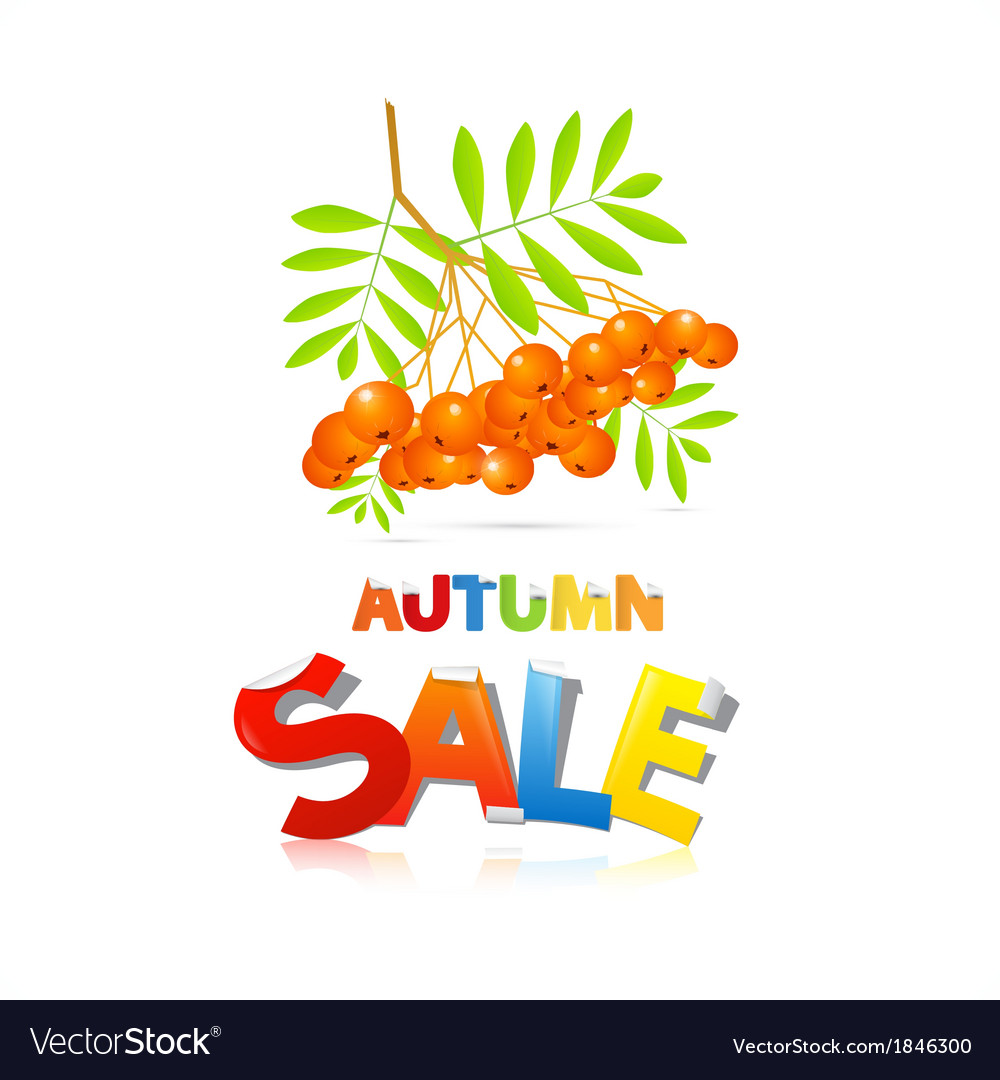 Colorful autumn sale theme with rowan berries vector | Price: 1 Credit (USD $1)