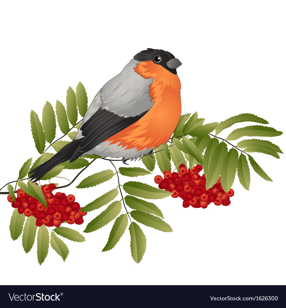 Rowan branch vector | Price: 1 Credit (USD $1)