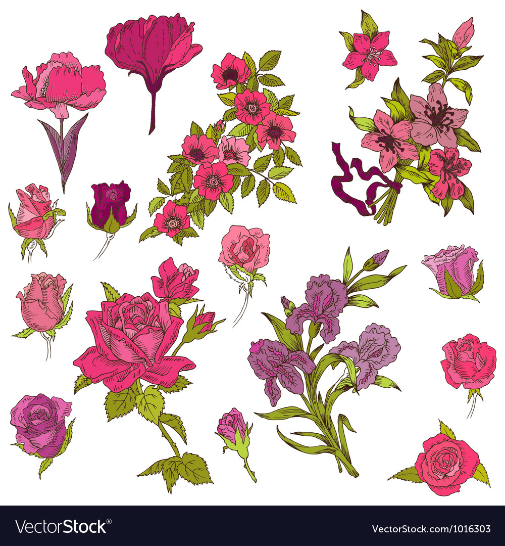 Detailed hand drawn flowers vector | Price: 1 Credit (USD $1)