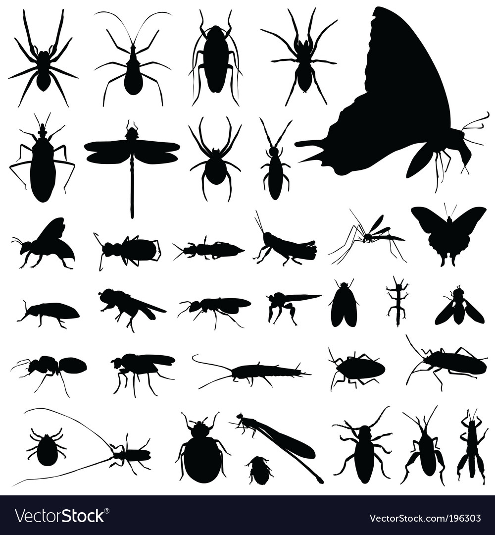 Set of insect vector | Price: 1 Credit (USD $1)