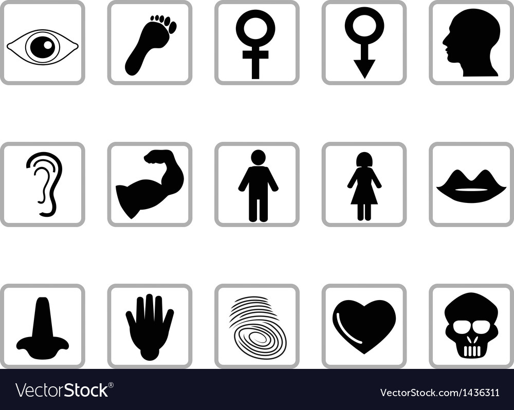 Human feature icons vector | Price: 1 Credit (USD $1)