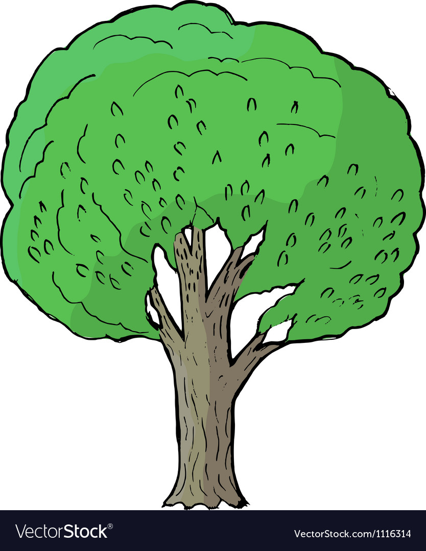 Poplar vector | Price: 1 Credit (USD $1)