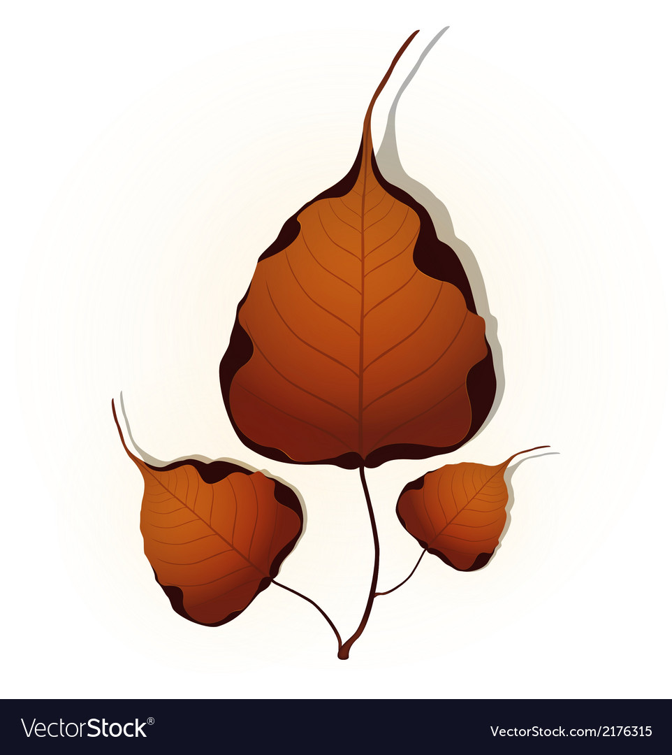 Bodhi leaf natural vector | Price: 1 Credit (USD $1)