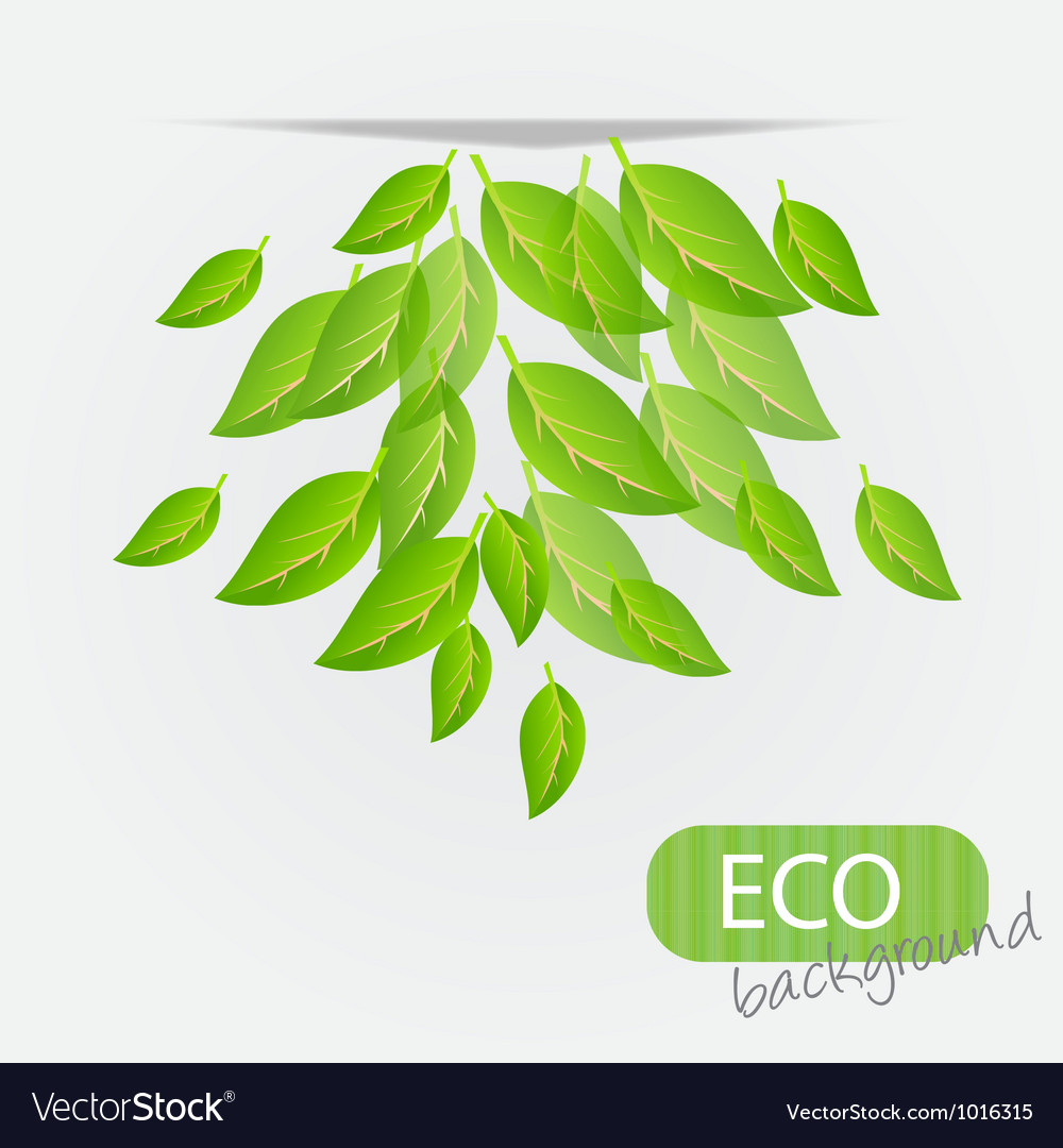 Eco leves background vector | Price: 1 Credit (USD $1)
