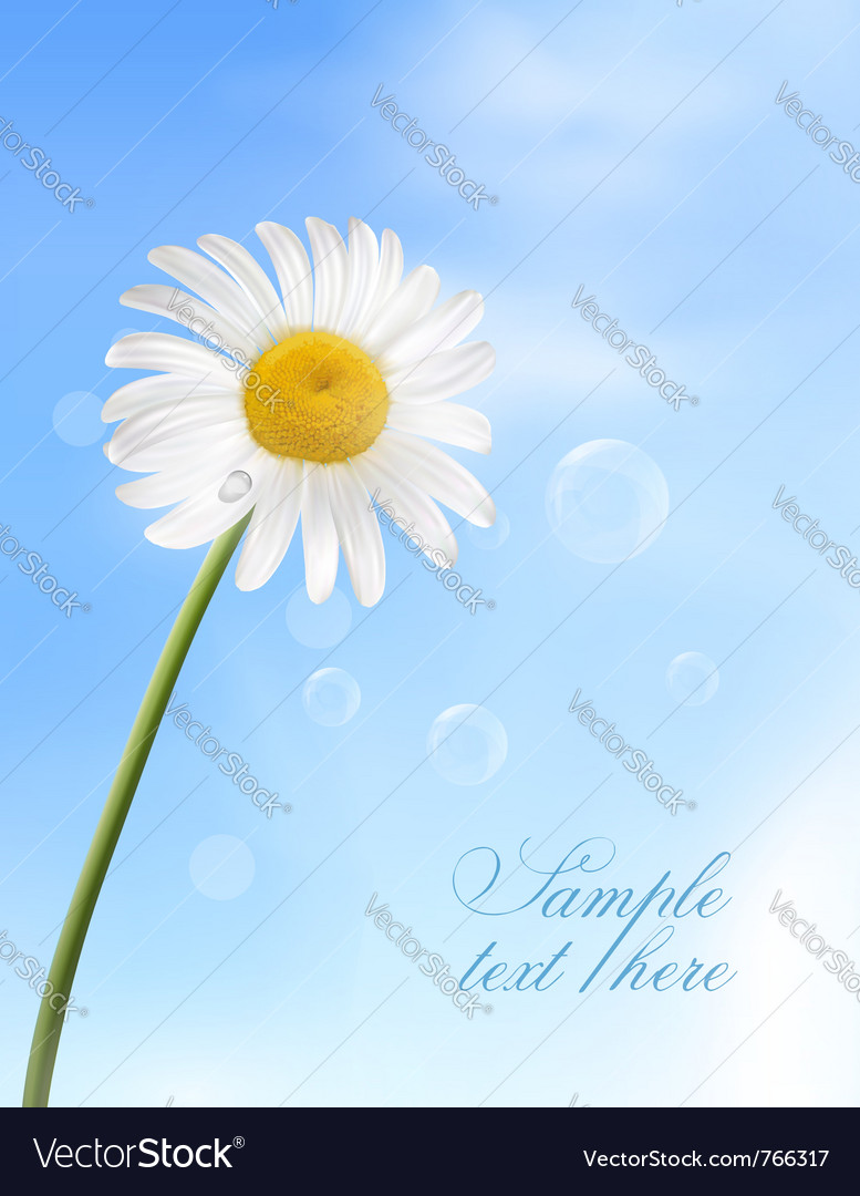 Chamomile flower vector | Price: 3 Credit (USD $3)
