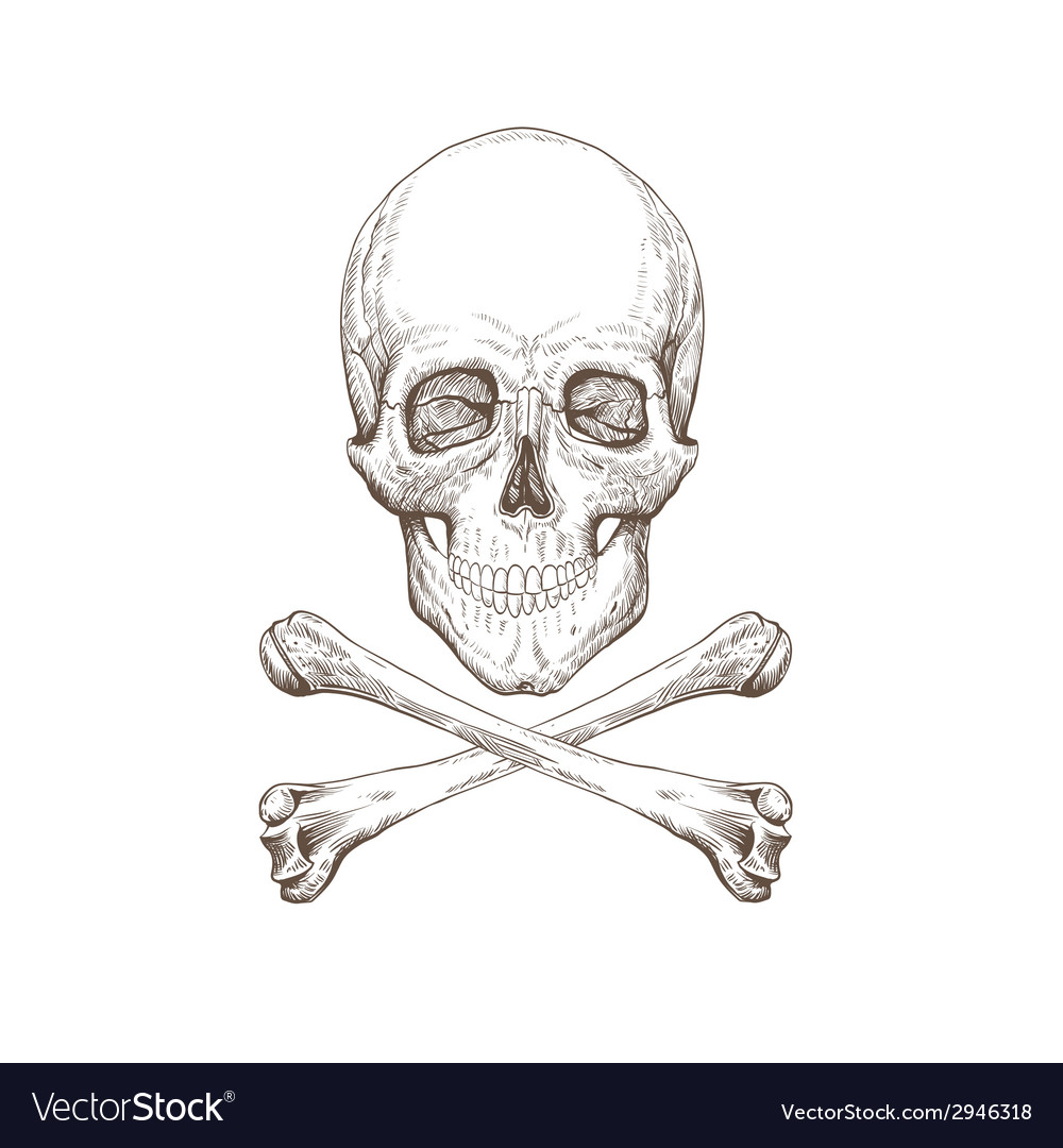 Skull and bones drawing vector | Price: 1 Credit (USD $1)