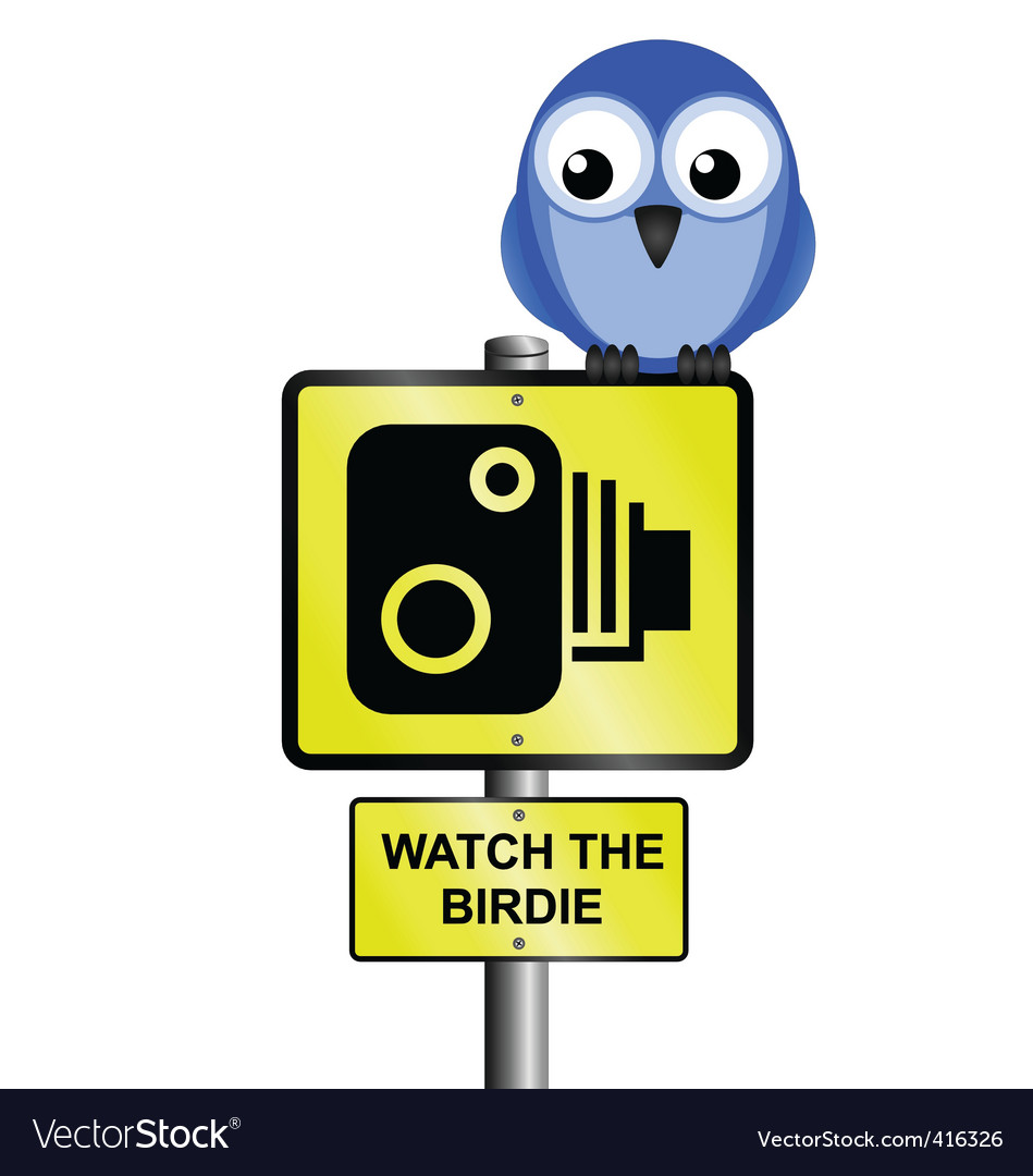 Bird speed camera vector | Price: 1 Credit (USD $1)