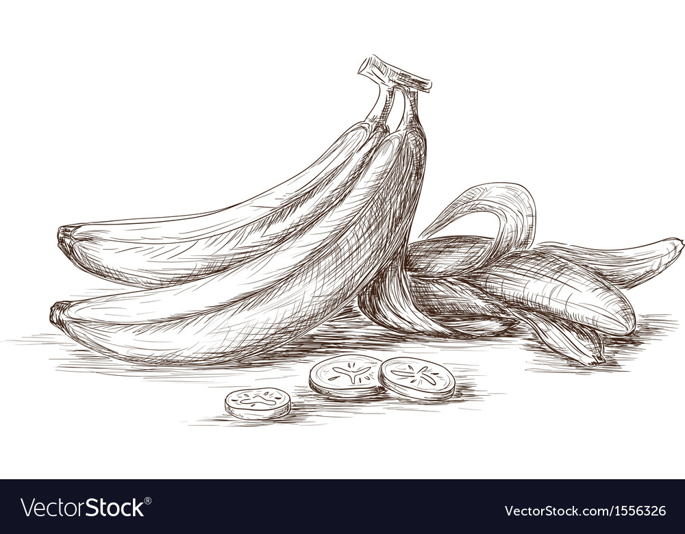 Hand drawn bananas vector | Price: 1 Credit (USD $1)