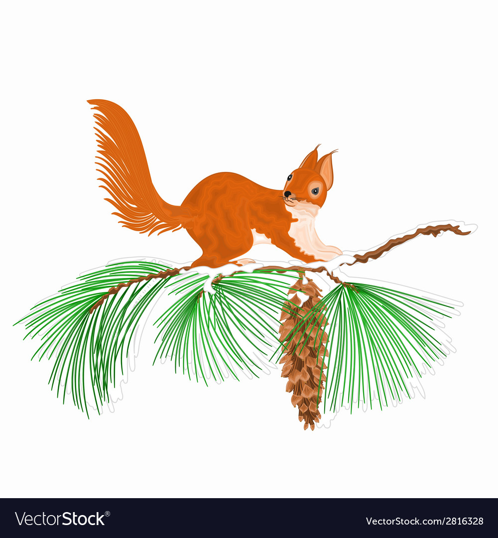 Squirrel on a snow branch christmas motive vector | Price: 1 Credit (USD $1)