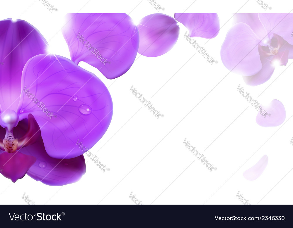 Background with orchids vector | Price: 1 Credit (USD $1)